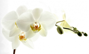 Accompagnement personnel et/ou professionnel dans MAGIC LIST orchid%C3%A9e-300x184