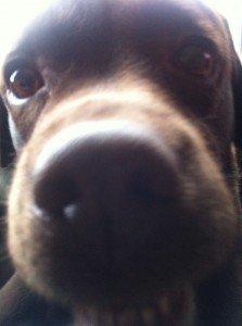 My sweet dog ! dans MES BONHEURS QUOTIDIENS img_16521-223x300