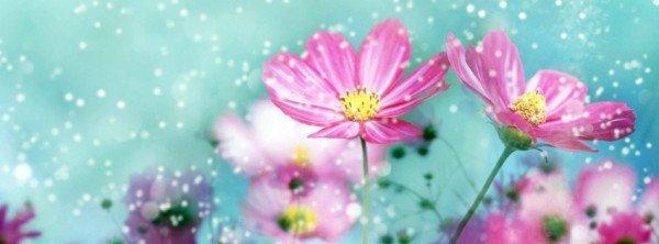 photo-fleurs-neige-600x222